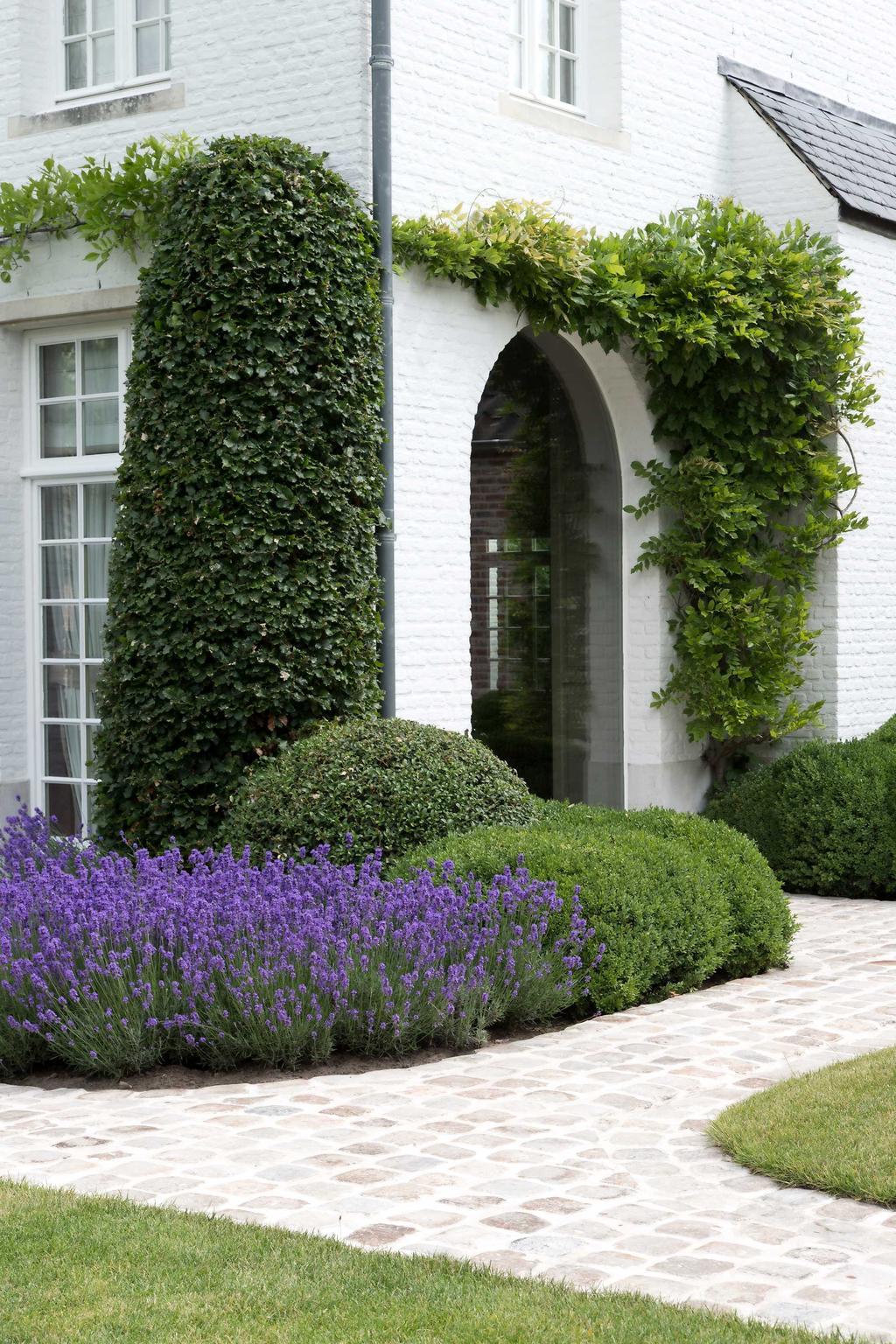 tuin gevel blauweregen