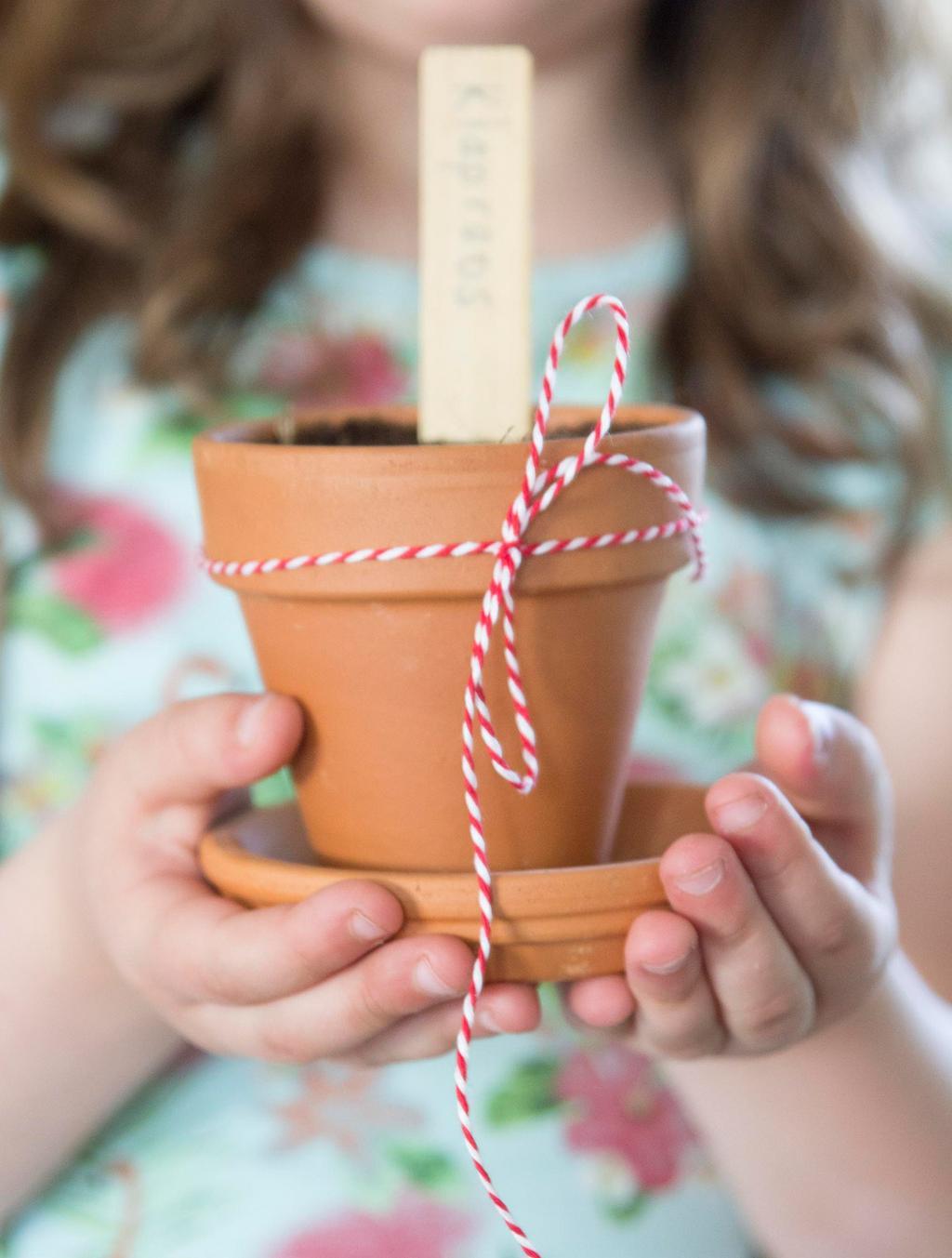 Terracotta bloempot met klaproos zaden