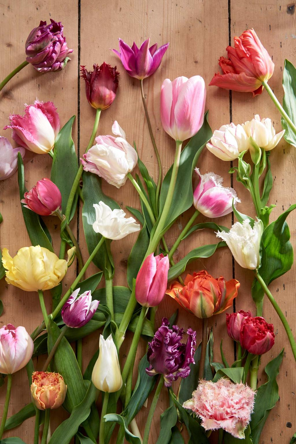 Gekleurde tulpen neergelegd op hout