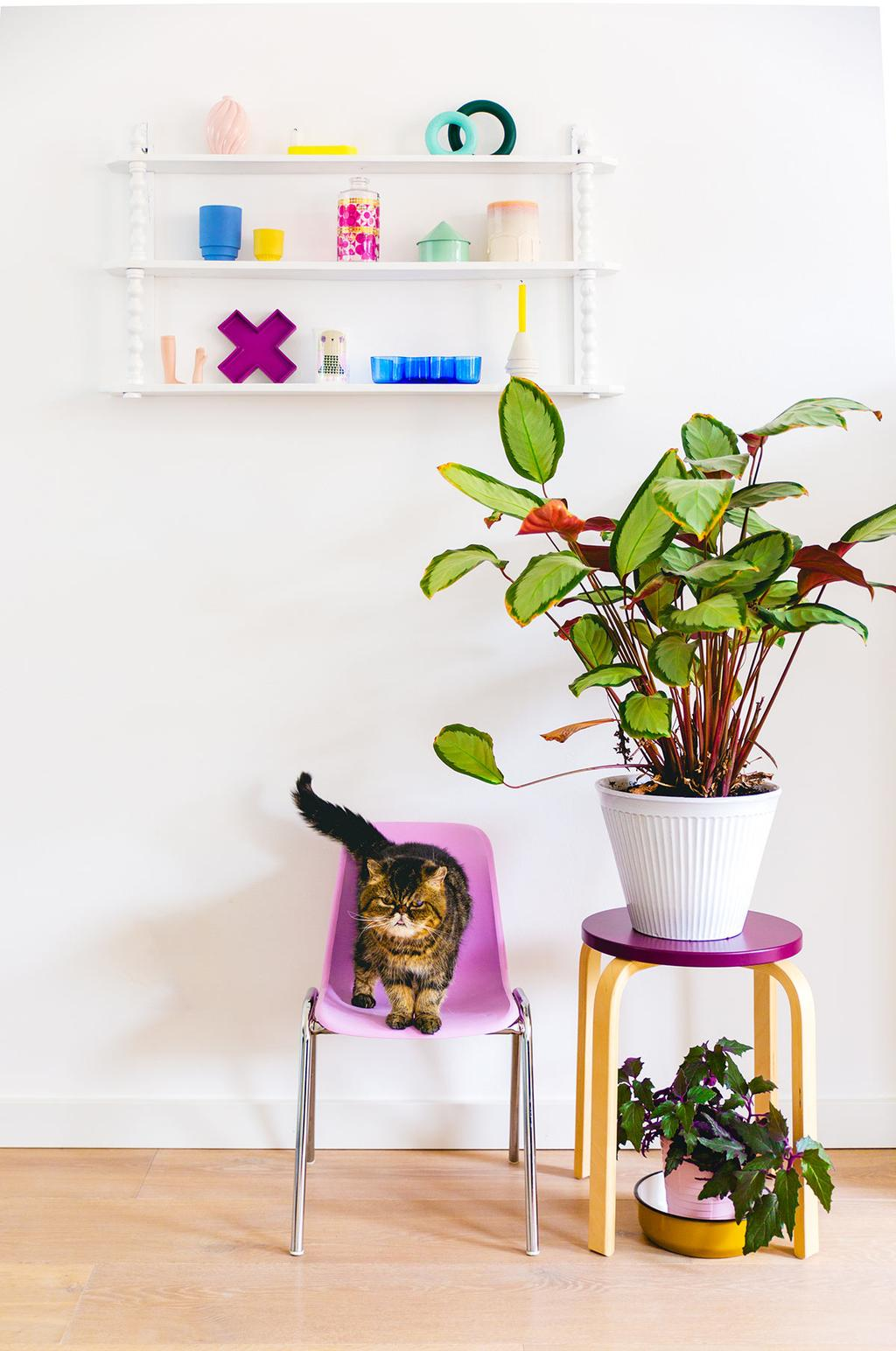 Roze kinderstoel met een kat, kruk met planten en een wandrek vol accessoires