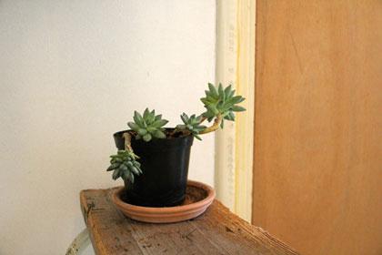 Gratis plant