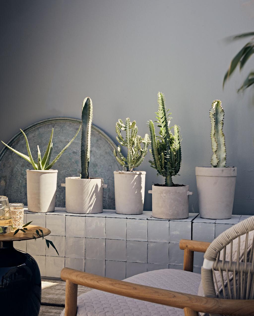 vtwonen collectie pot en plant herfst 2020 betonnen potten en cactussen | kamerplant naar buiten