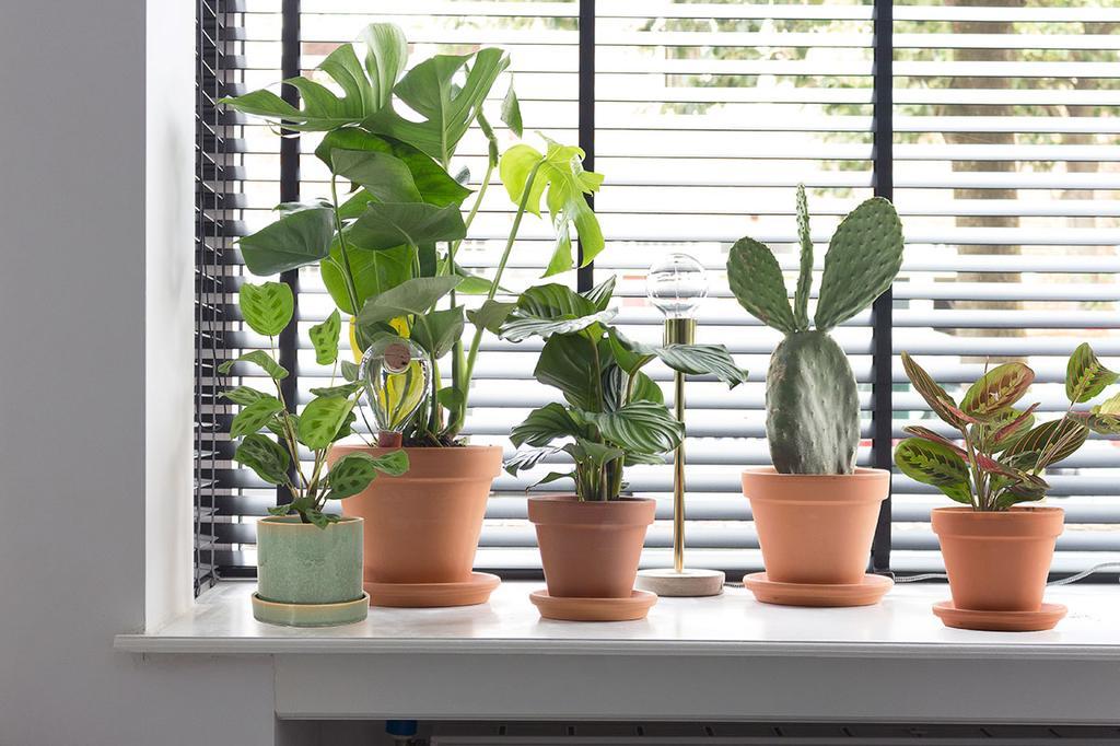 Kamerplanten op een vensterbank