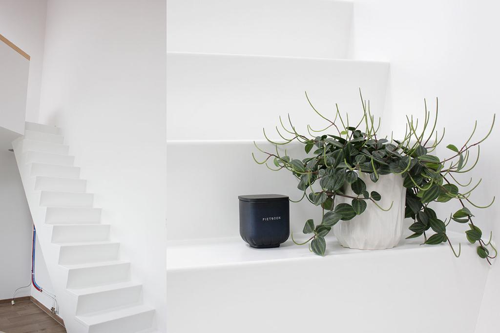 Witte trap en plant