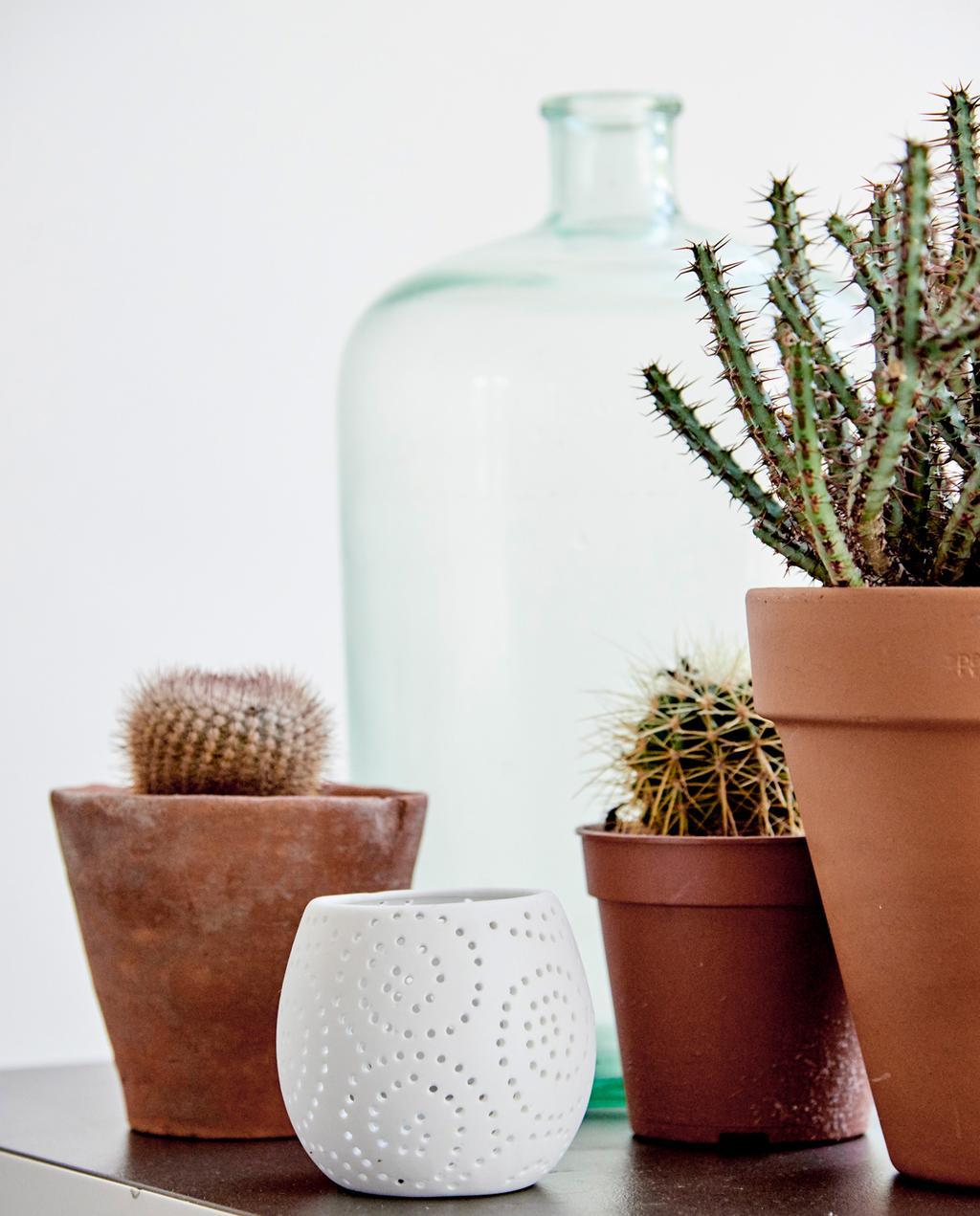 groepje cactussen bij elkaar