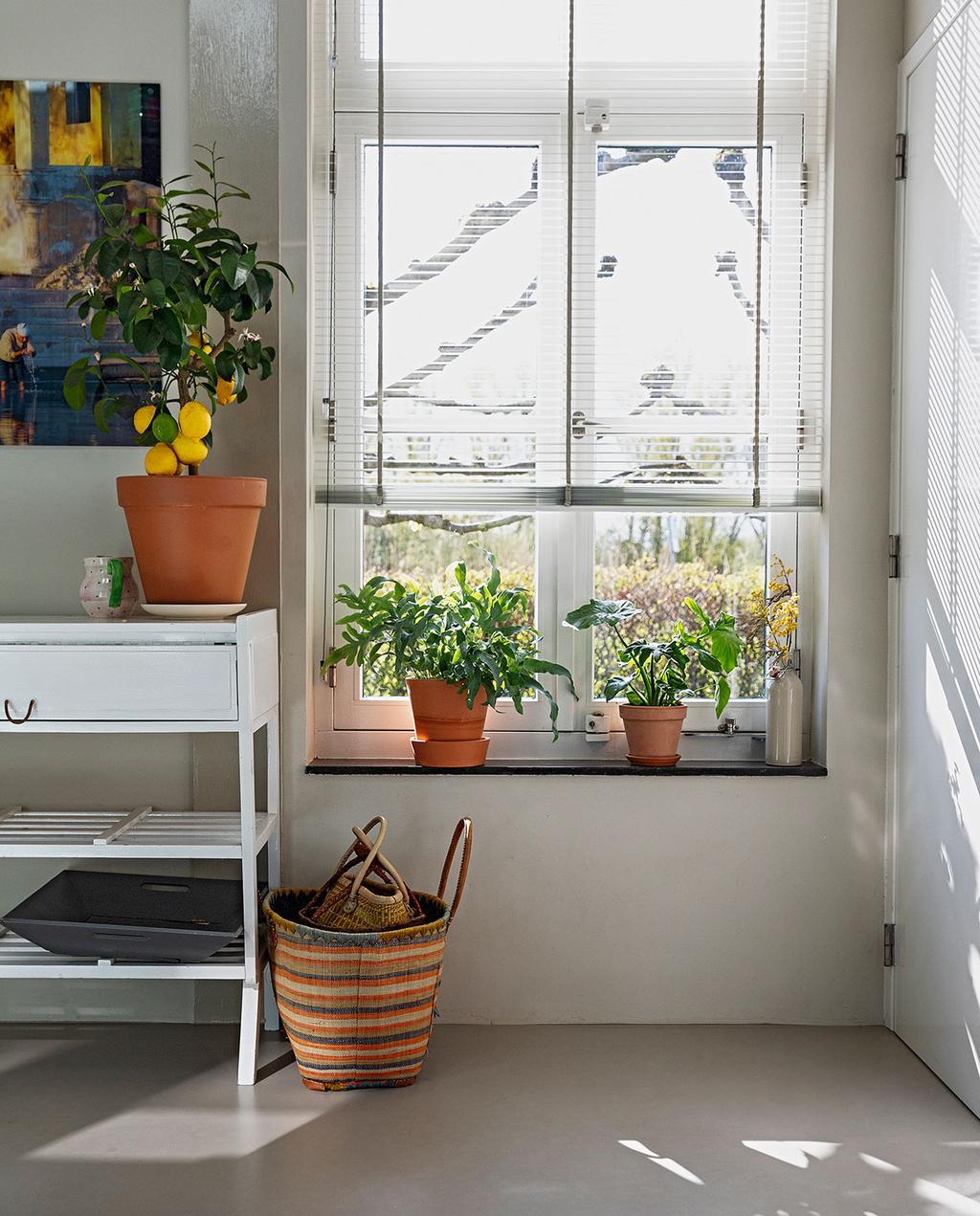 vtwonen 07-2021 | raam met bloempotten