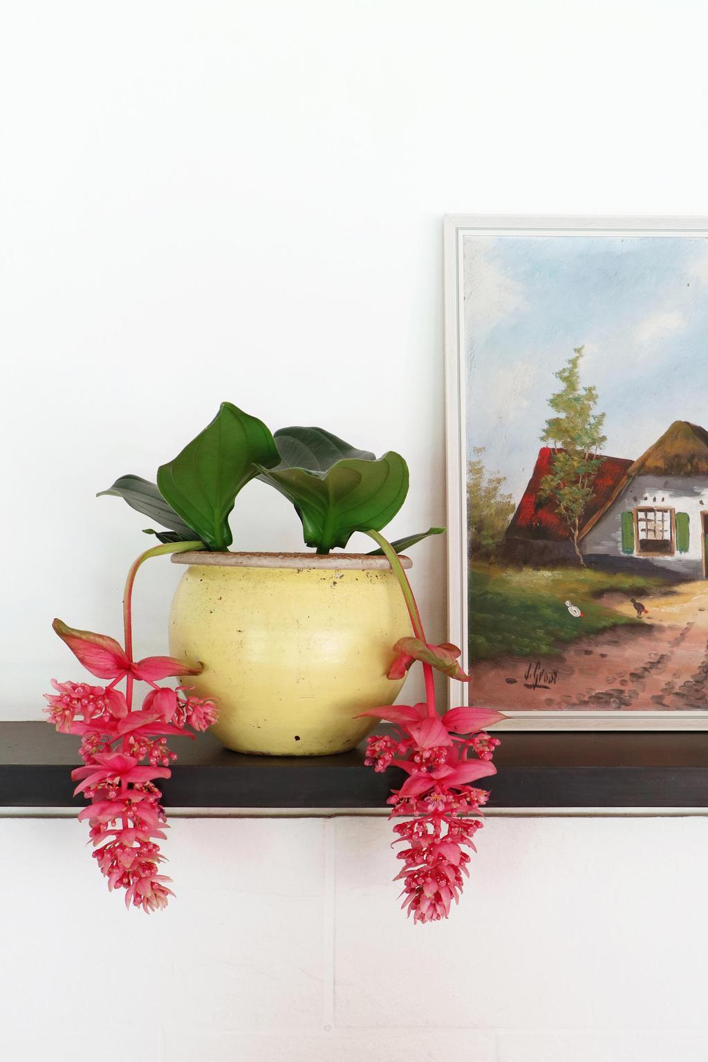pot-plante-fleurs-tombantes-roses