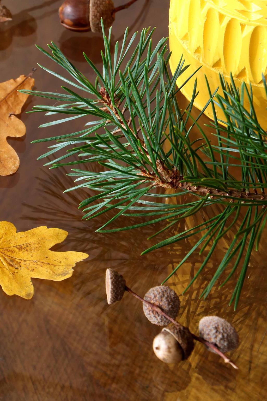 Herfstbladeren en dennen