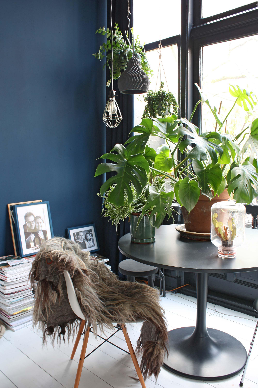 Plantenverzameling in blauwe serre