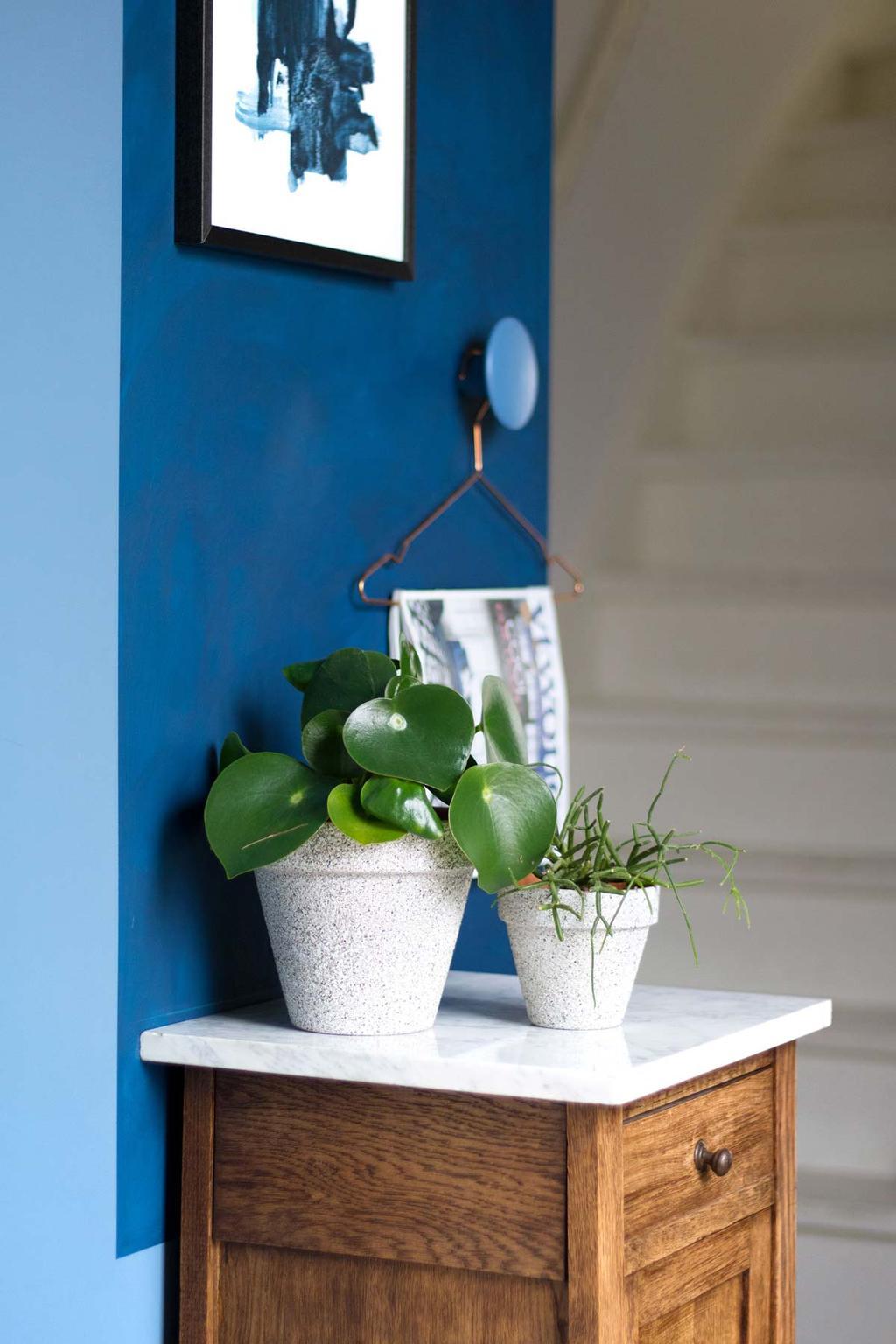 Planten in bloempotten met betonlook op een kastje in de gang met blauwe muur