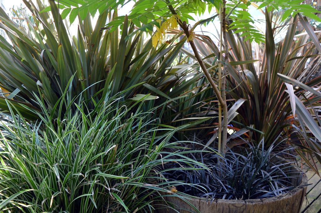 phormium-tenax-grassen-en-azijnboom