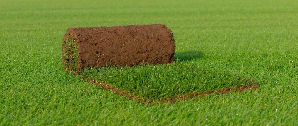 Graszoden leggen - Queens Grass - vtwonen