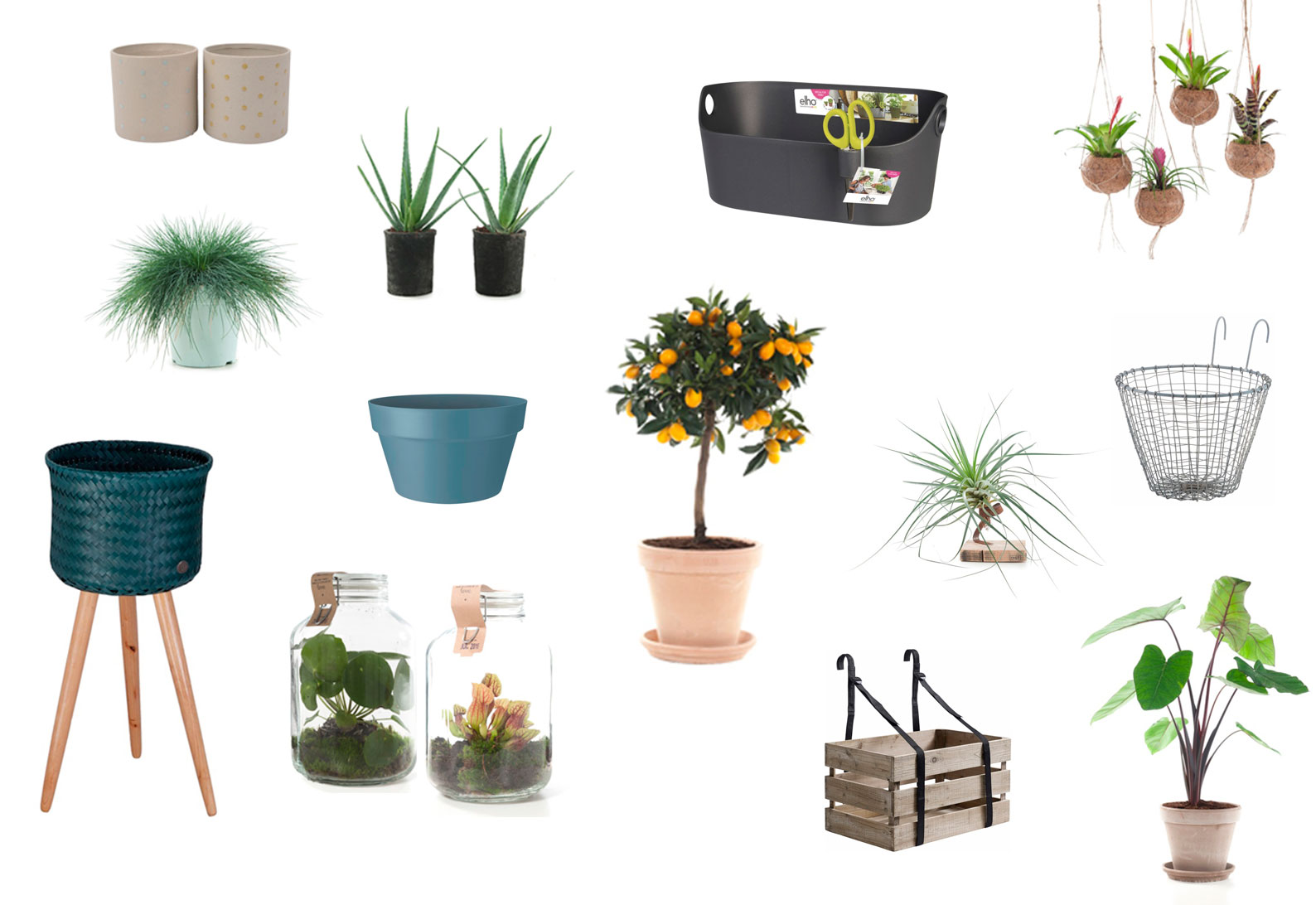Shopping planten en potten