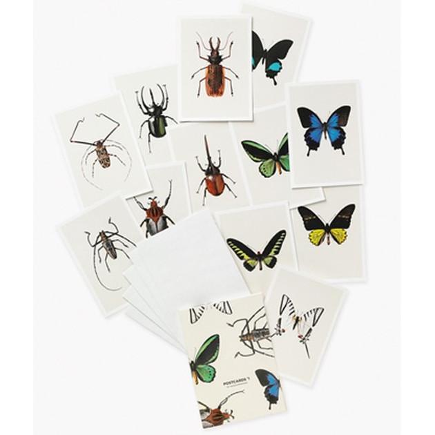 hagedornhagen-insecten