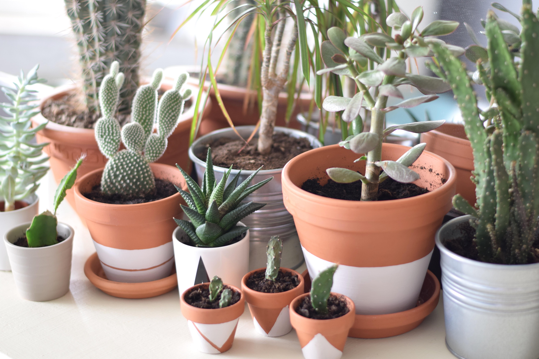 terracotta plantenpot verf