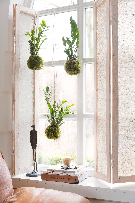 zamioculcas hangplant