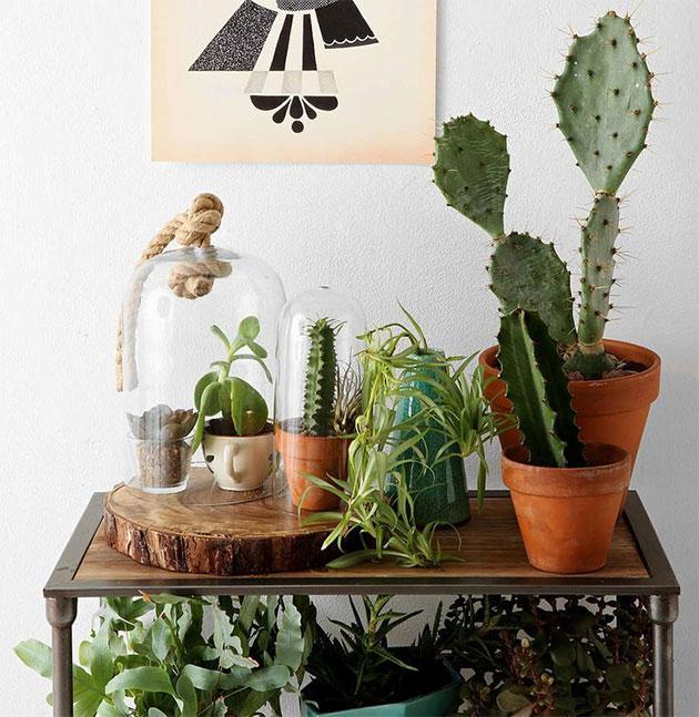 urban jungle cactus