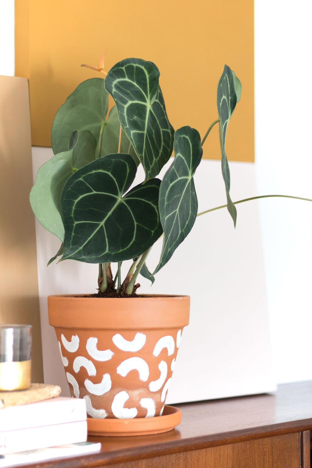 Blogger Marij Hessel schrijft over de plant Anthurium Clarinervium.