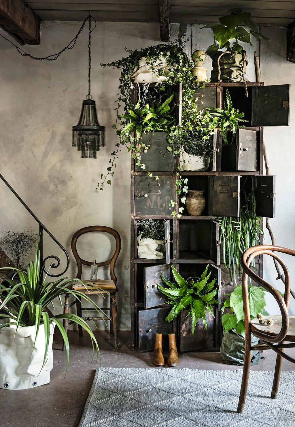Zelf een plantenkast maken van een vintage, industriële kast