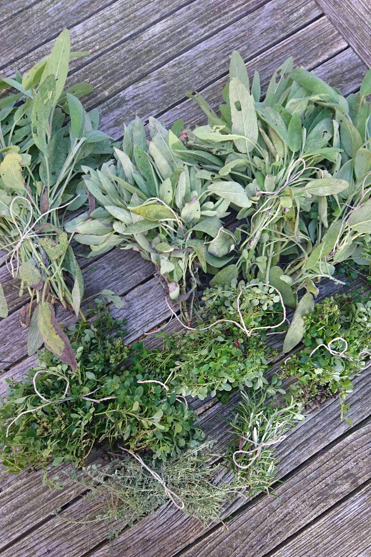 kruiden oogsten moestuin