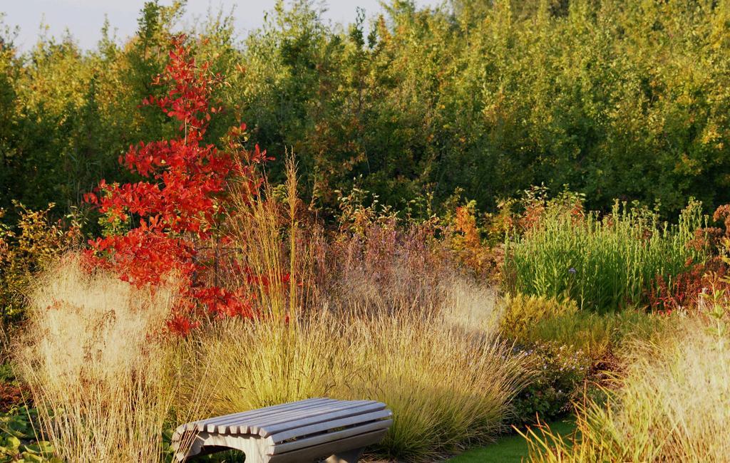vtwonen blog kristel engelen | tuininspiratie vlinderhof prairiegras