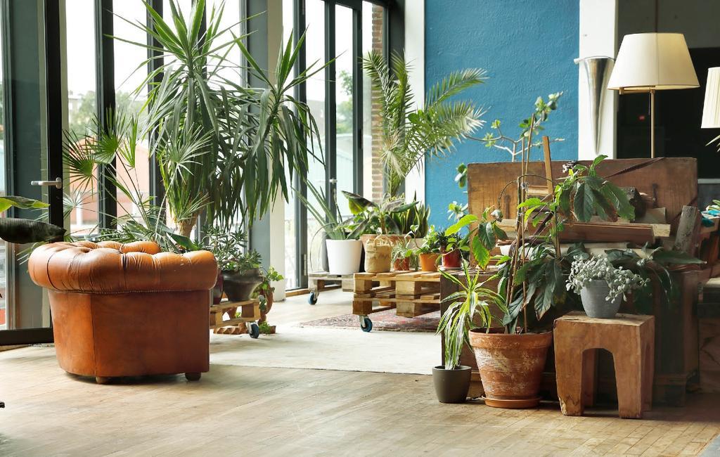 urban jungle | binnenkijken | planten