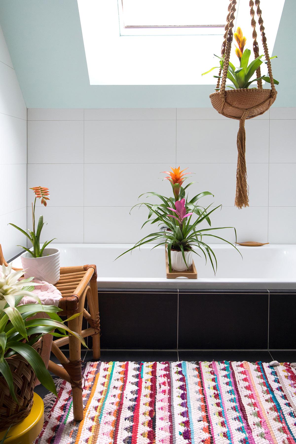 Bromelia in de badkamer