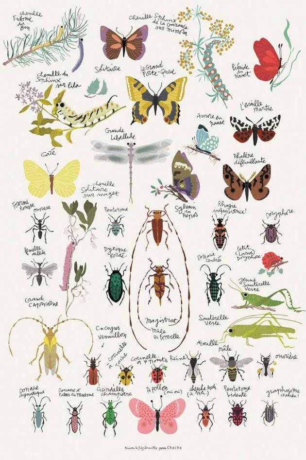 insectenposter