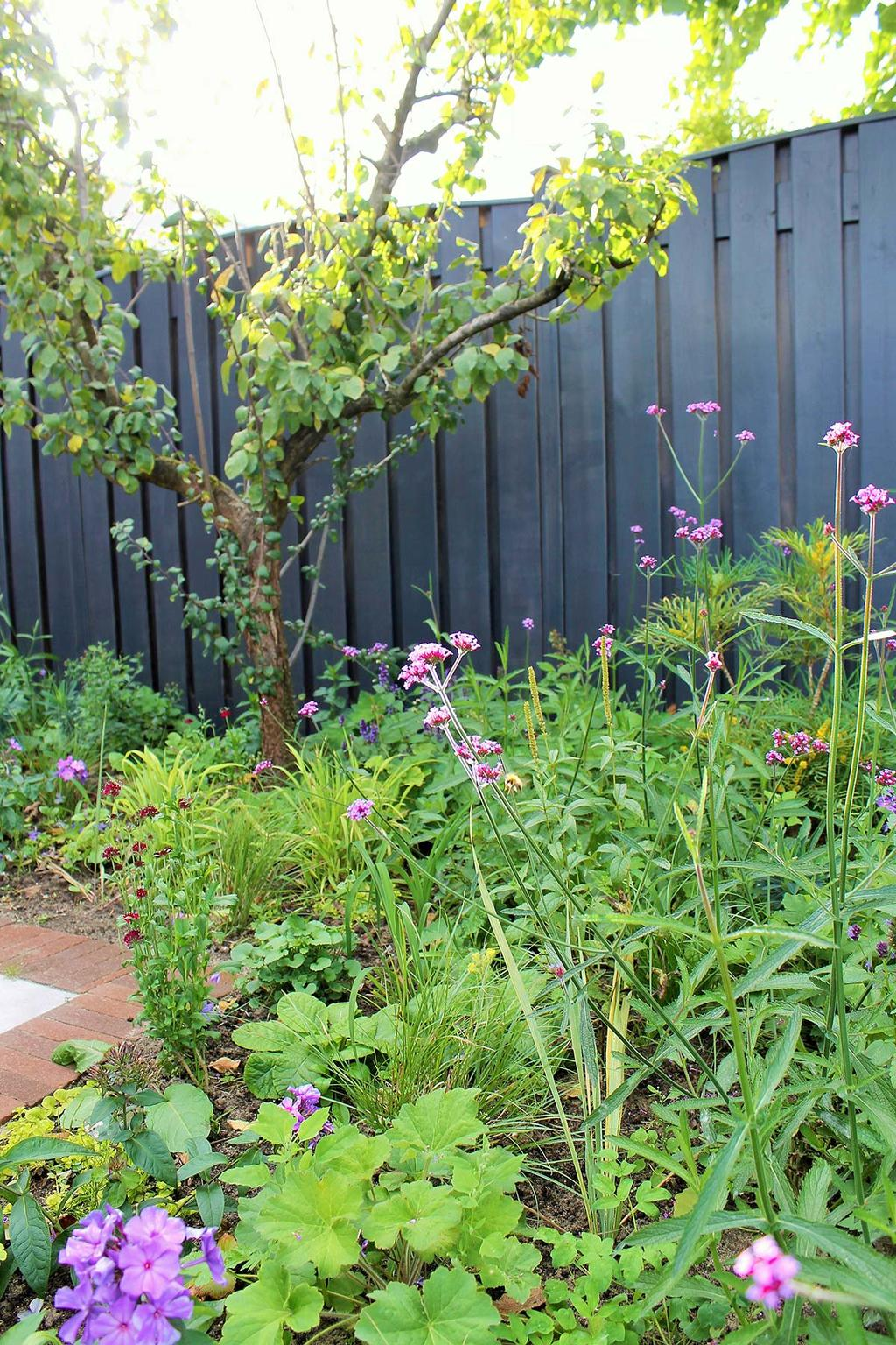 Verbena in de tuin van blogger Kristel