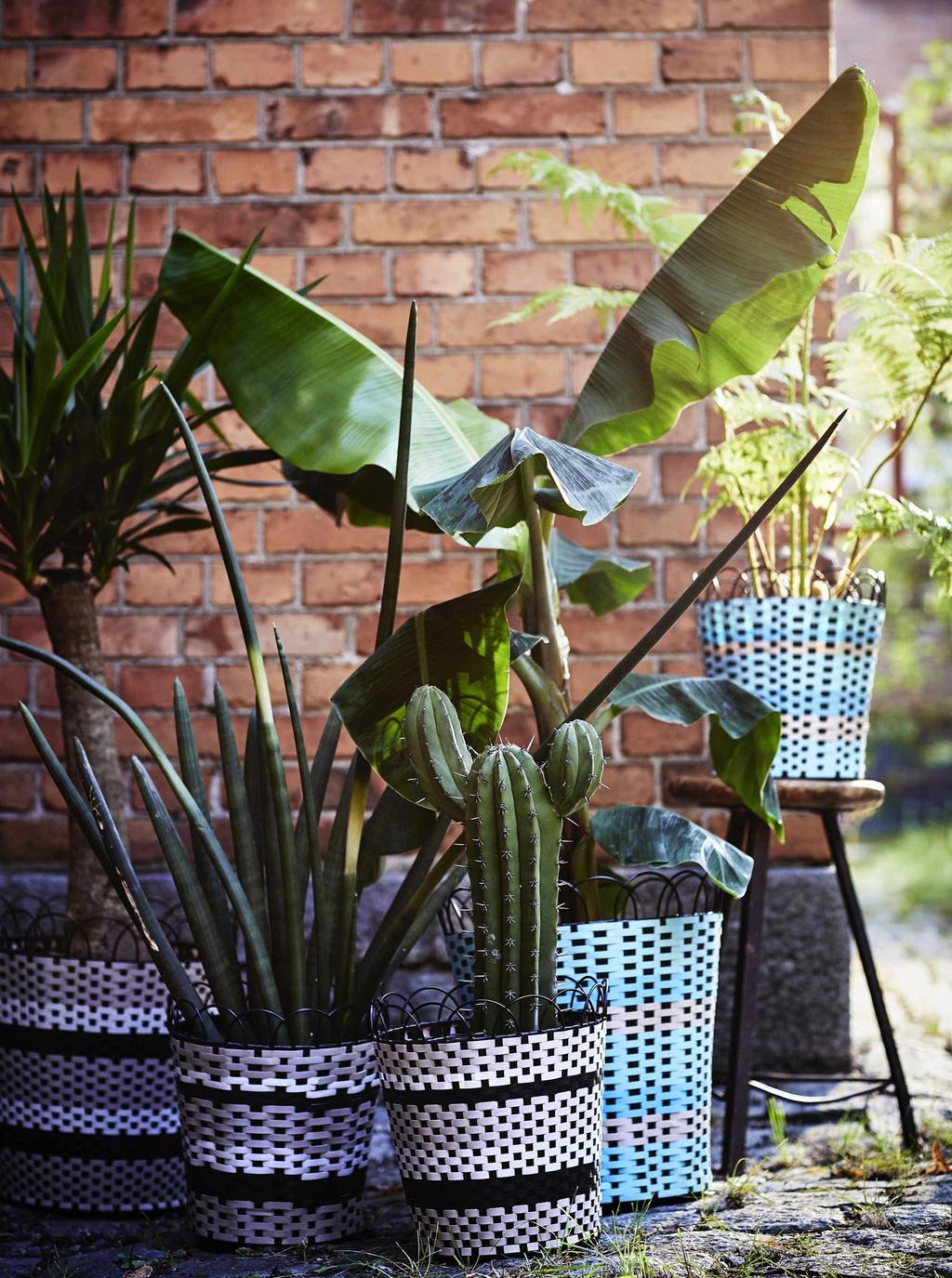 nieuwe zomercollectie IKEA cactussen en planten in kleurrijke bloempotten