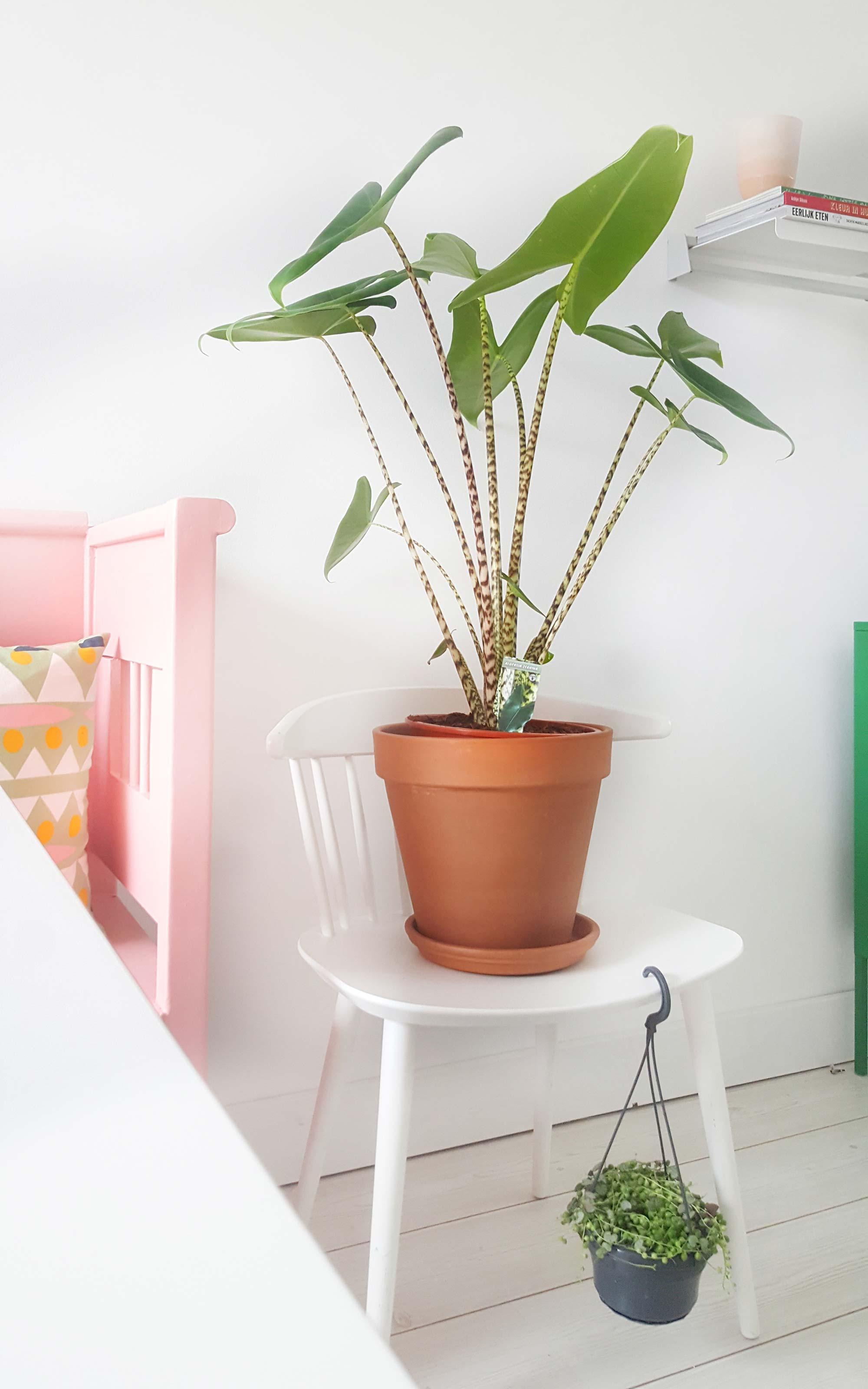 Groen in huis bij blogger Mamoesjka