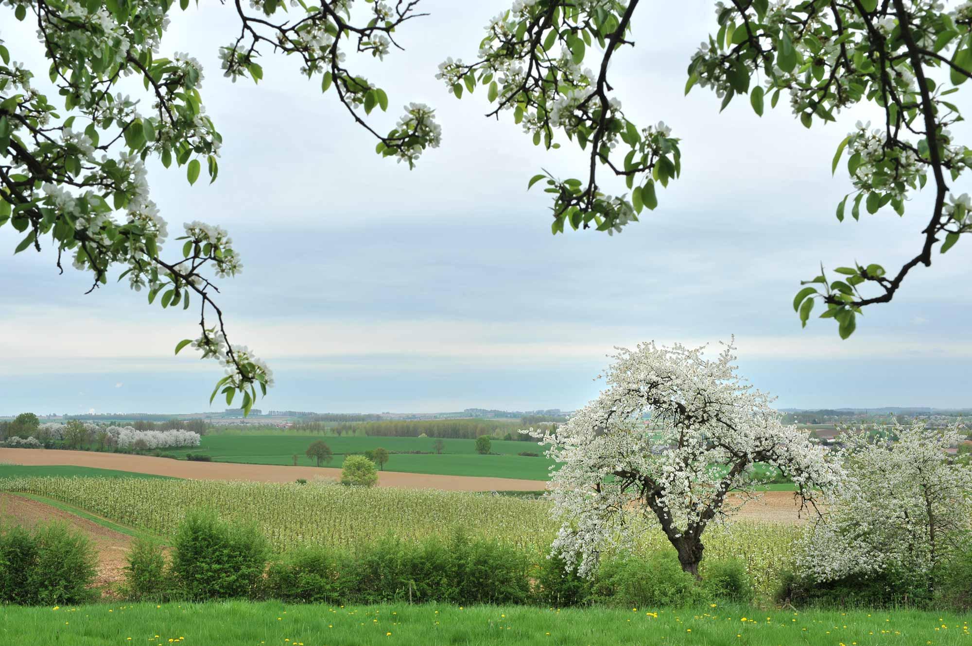 bloesem weide uitzicht natuur