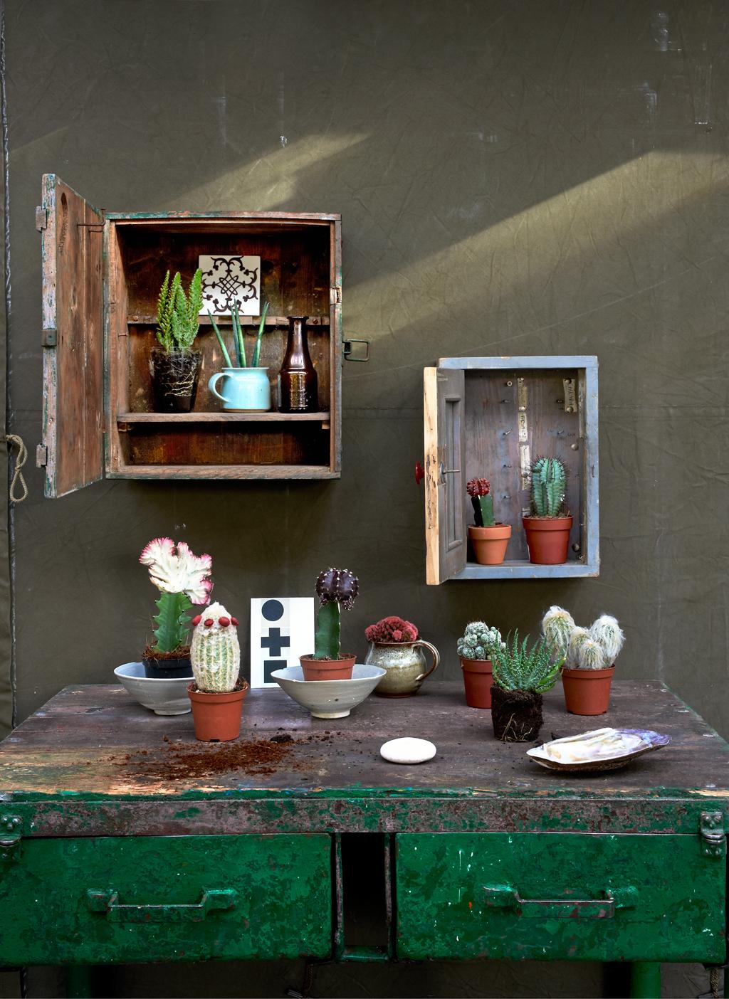 planten in hangkastjes