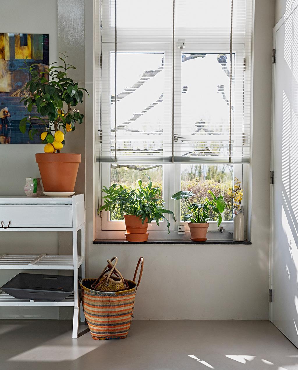 vtwonen 07-2021   witte kast met verschillende bloempotten op de kast en in de vensterbank