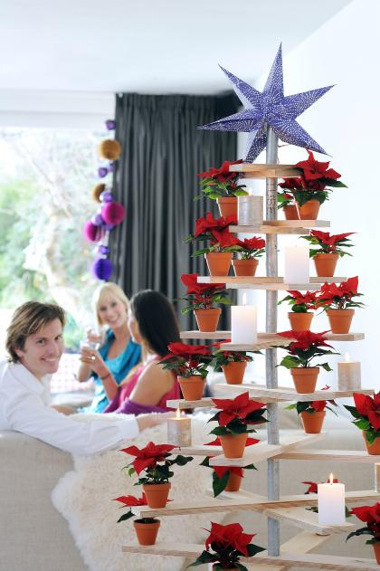kerstboom planten