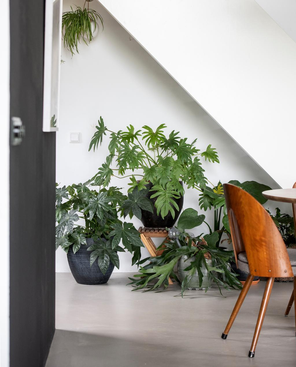 plantenhoek met houten eetkamerstoelen