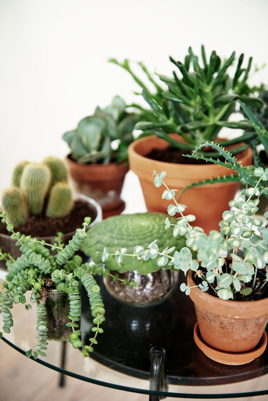 plantenverzameling