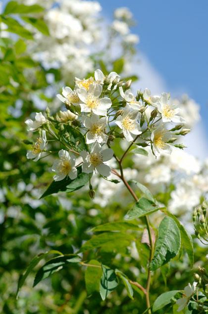 fruitboom-planten