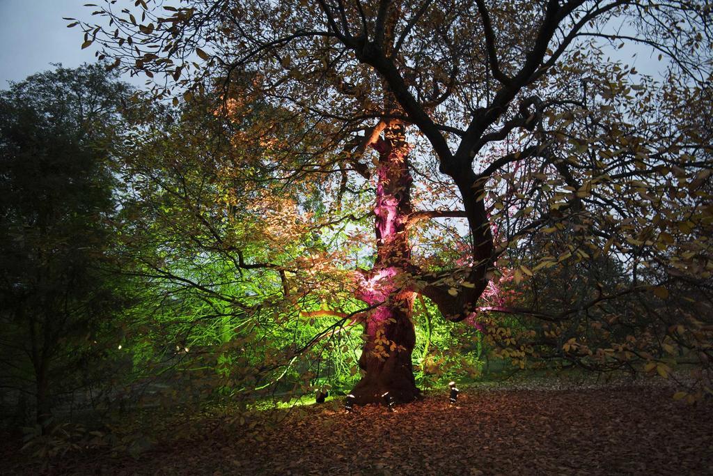 Verlichte boom