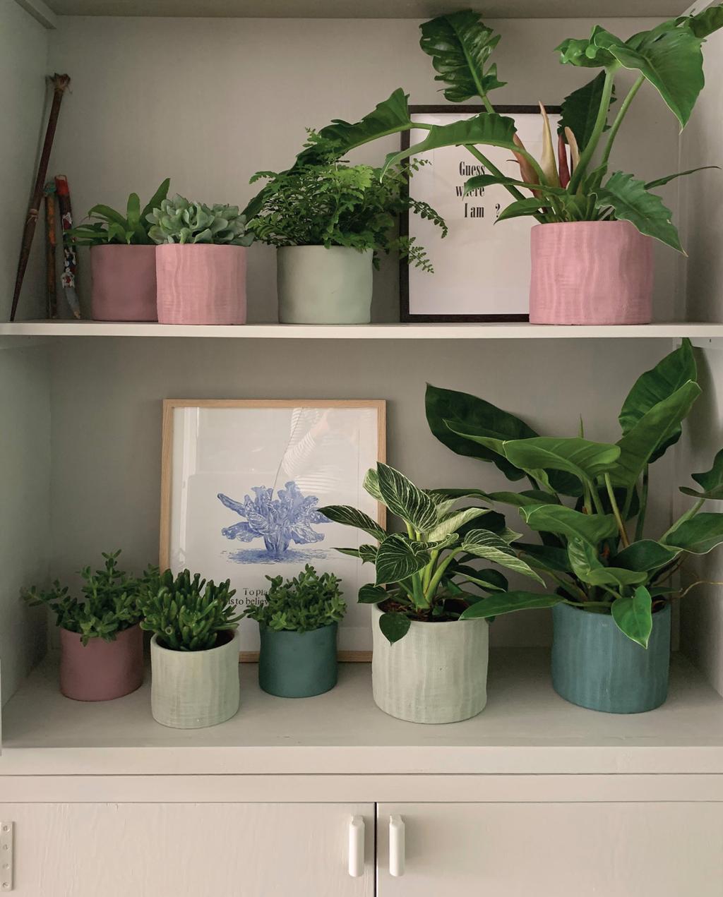 roze en blauwe potten kamerplanten