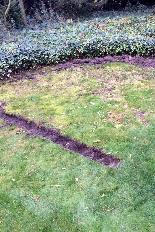 rijtje tuin moestuin gras