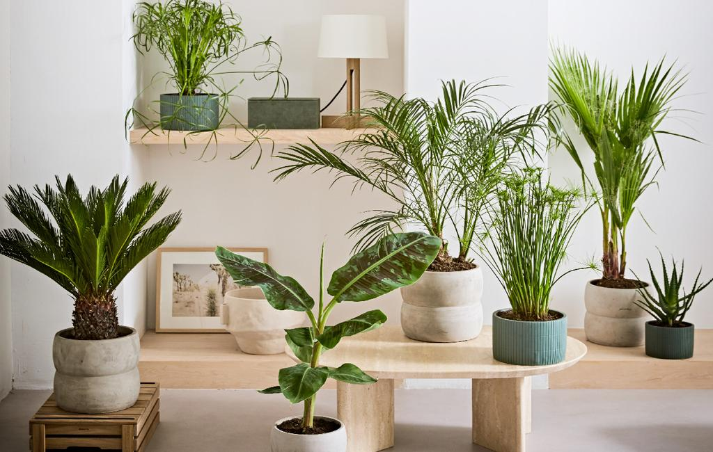 vtwonen collectie pot & plant tropische kamerplanten op scandinavische tafel