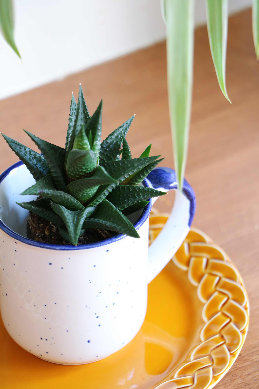 Plant in mok My Attic