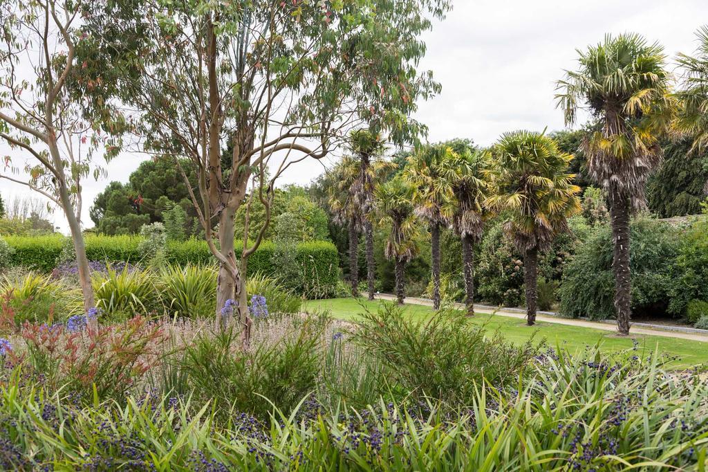 bomen palmen tuin