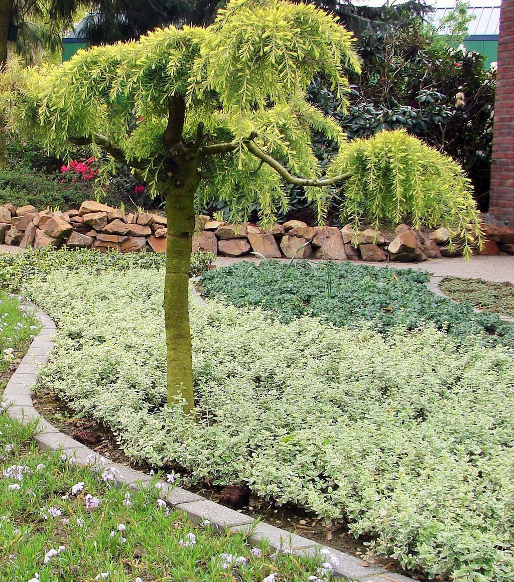 blog kristel tuin met bodembedekkers
