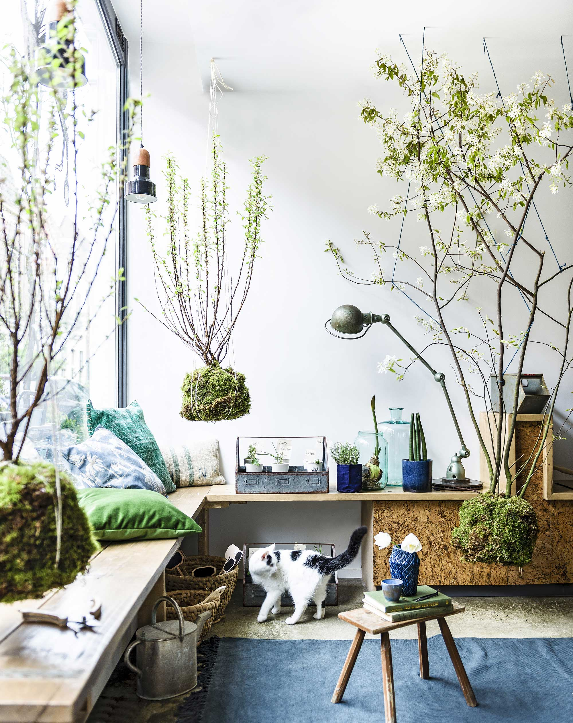 suspension-plantes-deco-diy