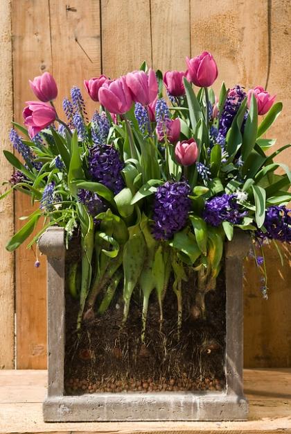 lasagnebeplanting-bloembollen