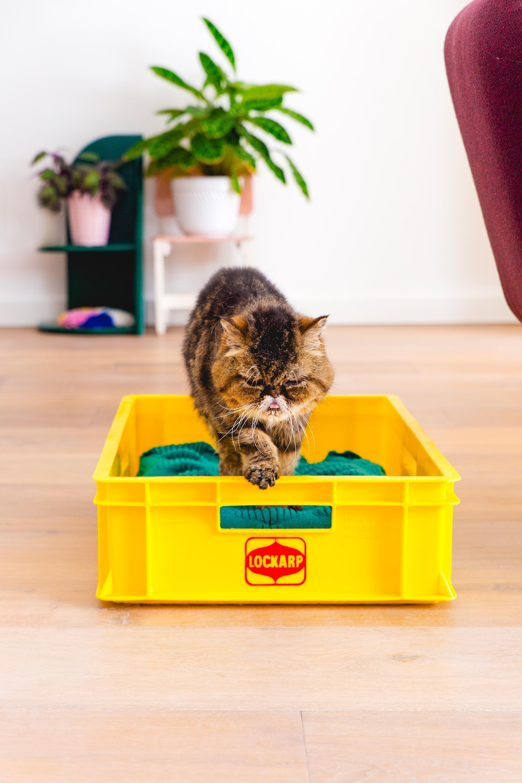 Geel vintage krat voor de kat