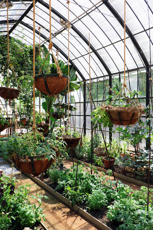 babylonstoren hangplanten