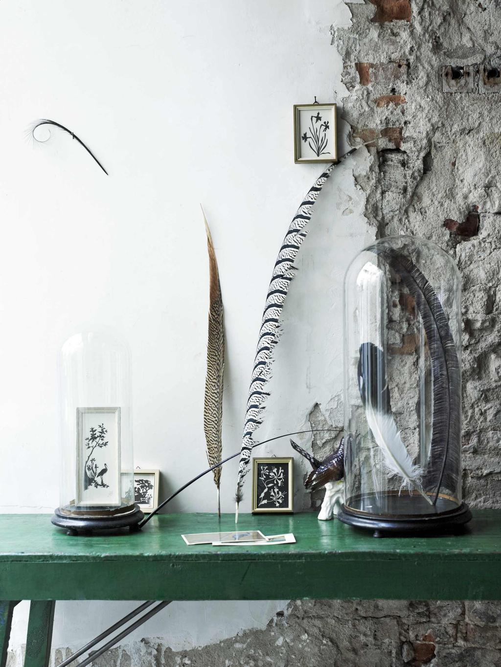 glazen stolp met veer